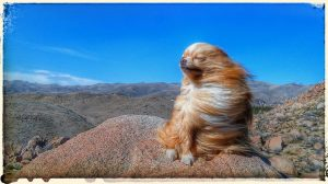 Not everybody minded the wind. Photo courtesy Taylor James (and Benson the dog.)