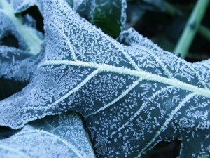 Frost 015