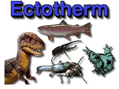 ectotherm
