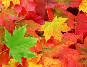 leaves color
