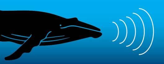 Whale sound