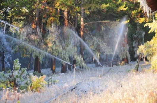 Frozen sprinklers